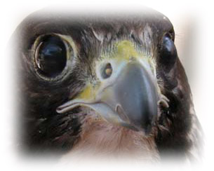 Broken beak image