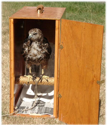 Hawk Box image